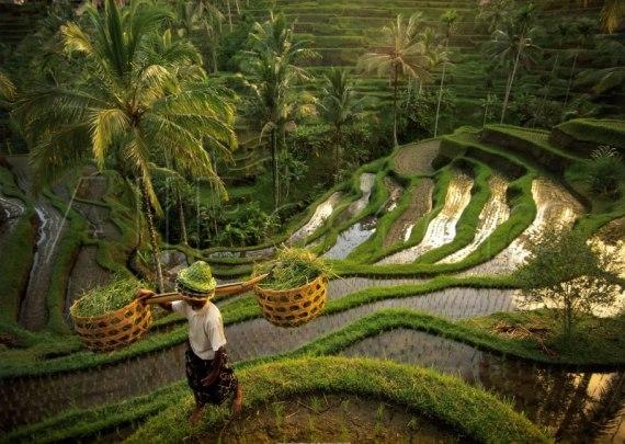 Bali_People